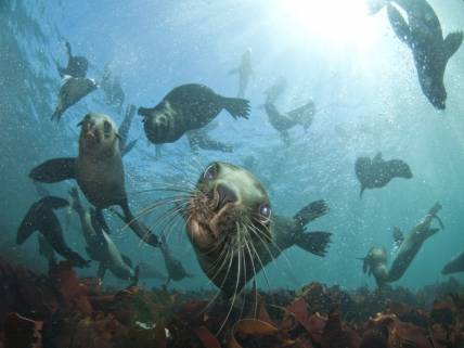Animal Ocean, Cape Town